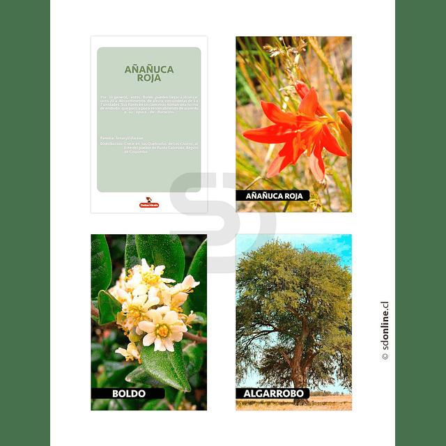 Láminas Conociendo Flora De Chile