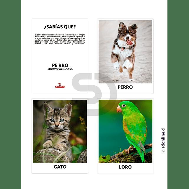 Set De 18 Láminas Animales Domésticos