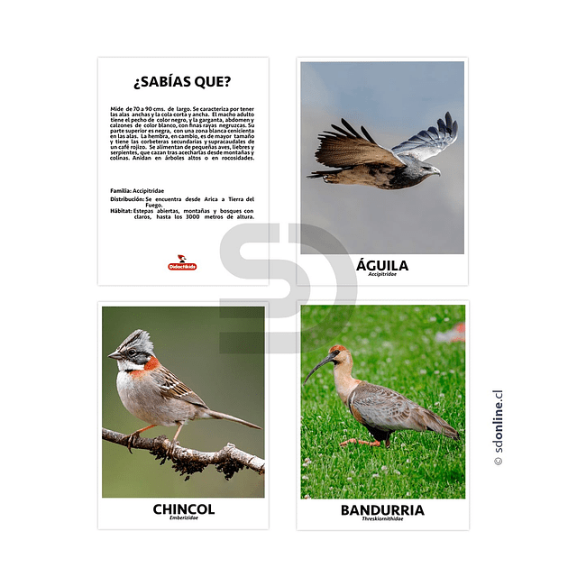 Set De 10 Láminas Aves De Chile
