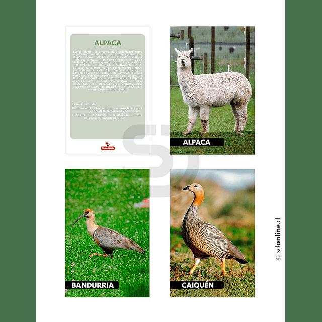 Láminas Conociendo Fauna De Chile