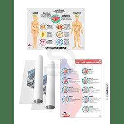 Set De 4 Láminas Sistema Linfatico Endocrino Embrionario Y Digestivo