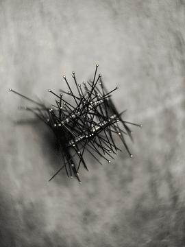 Entomology Pins
