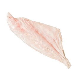 Reineta Filete Premium 1 Kg Global Frozen