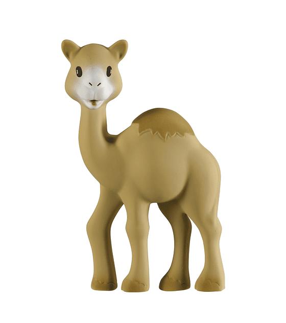 Al Thir the camel