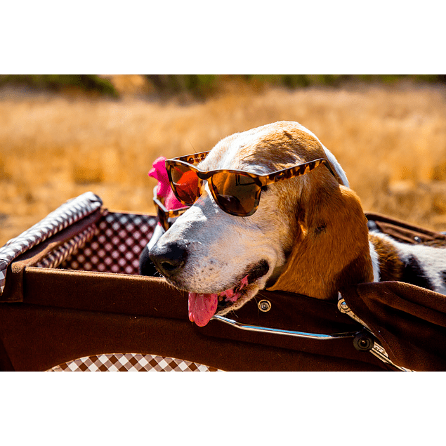 Anteojos de Sol Goodr Bosley's Basset Hound Dreams