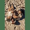 Anteojos de Sol Goodr WOD (Walruses Of The Desert)