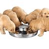 Plato Comedero para cachorros