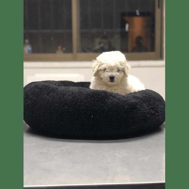 Camas redondas esponjosas talla M