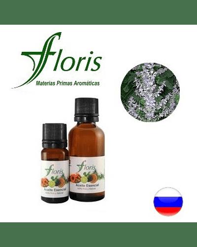 AMARO / SALVIA - Salvia sclarea