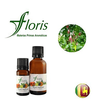 CANELA DE CEILAN - Cinnamomum zeylanicum (Hoja)