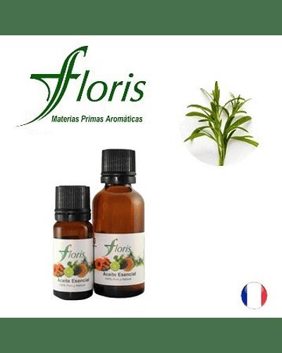 ESTRAGÓN - Artemisia dracunculus