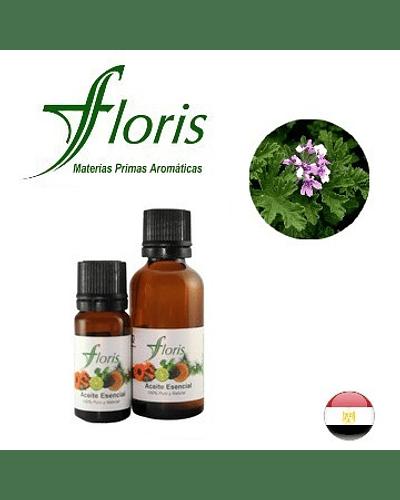 GERANIO DE EGIPTO - Pelargonium graveolens o asperum