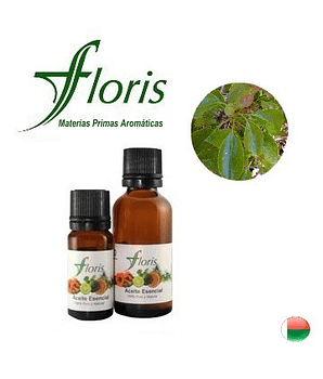 RAVINSTARA - Cinnamomum camphora