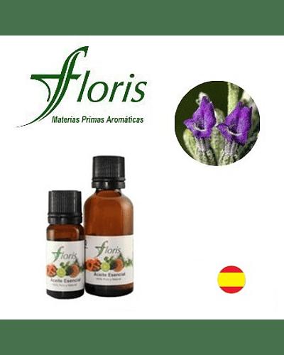LAVANDA ESPLIEGO MACHO - Lavandula latifolia spica