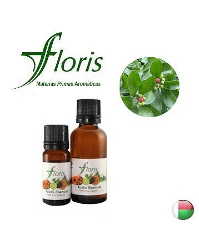 MANDRAVASAROTRA /SARO - Cinnamosma fragans
