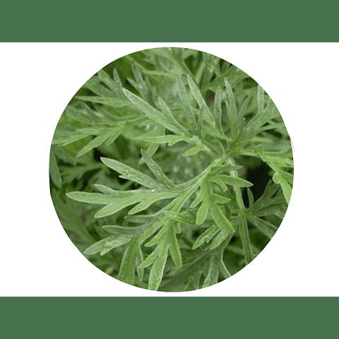 AJENJO (Artemisia absinthium), 20 gr aprox. - Presentación: (Tallo-Hojas-Flores) Deshidratado