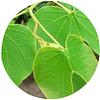 PATA DE VACA (Bahuinia forficata), 10 gr aprox. - Presentación: (Hojas)