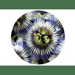 PASIFLORA o flor de la pasión, 15 gr aprox. - Presentación: (Hojas ,Tallos) Deshidratada