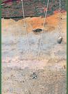 Starfish Necklace (S)