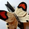 Fieltro Mariposa Blanca
