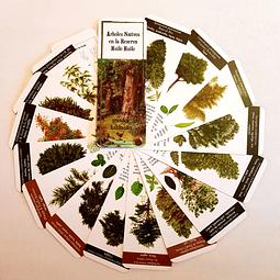 Set Pantonera de Árboles Nativos