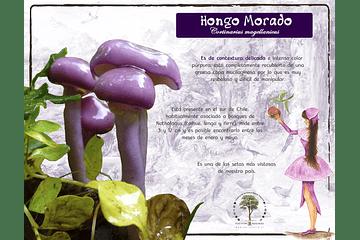 Hongo Morado