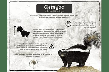 Chingue
