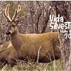 Calendario 2021 Vida Silvestre
