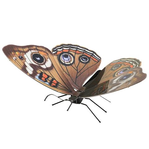 Mariposa Ojo de Venado