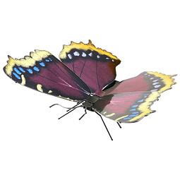 Mariposa Antílope