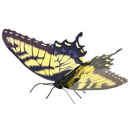 Mariposa Tiger Swallowtail