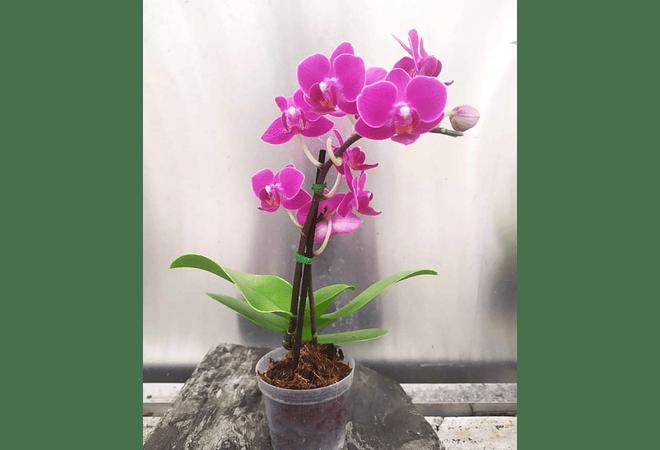 Orquídeas Pequeñas