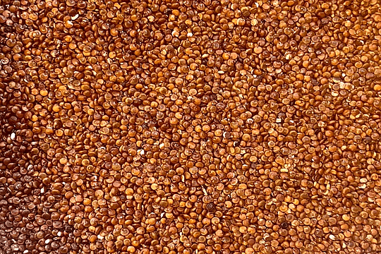 Quinoa Roja Mayorista 5 kilos