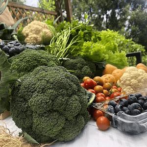 Mercado Orgánico Mediano
