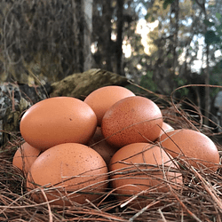 Huevos Orgánicos Cubeta 30 Und