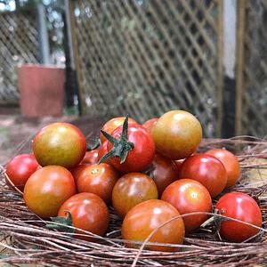Tomate Cherry Orgánico 1000 g