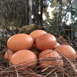 Huevos Orgánicos Cubeta 15 Und