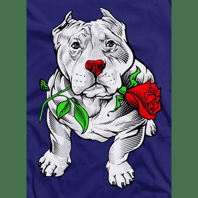 Pitbull Rose