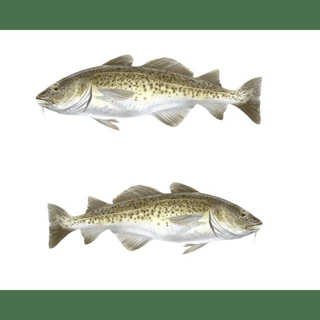 Aceite bacalao natural beber o tomar comprar jarabe líquido omega 3