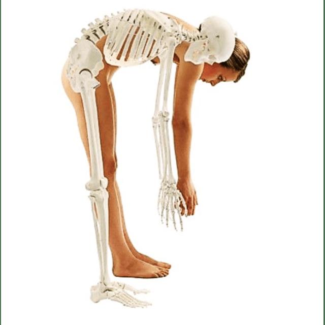 Calcio granulado + vitamina D suplemento huesos mujeres y hombres