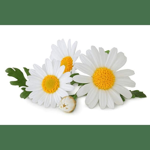 Natural organic chamomile lightening shampoo for light blonde hair