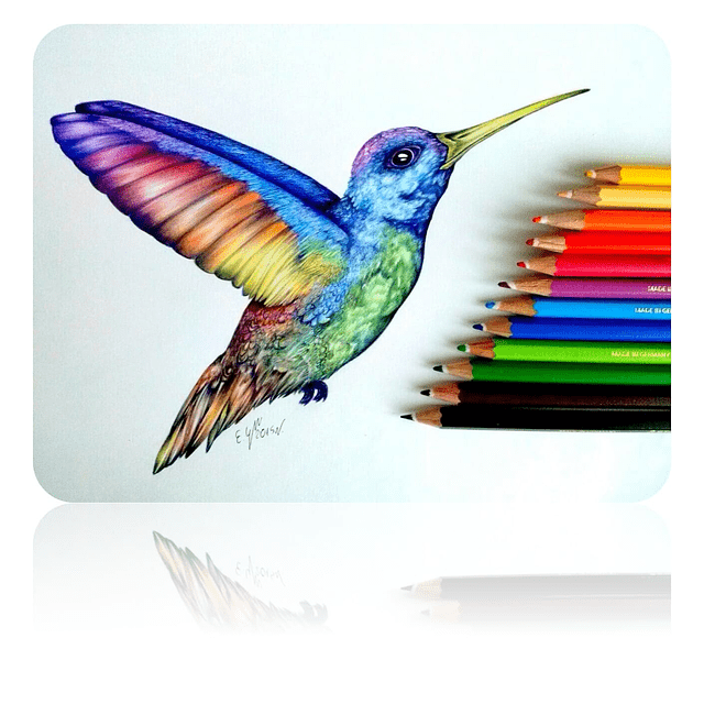 12 Lapices de colores madera natural palo new elite calidad pintar dibujo