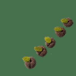 Ciruelas La Granjita de Conejino