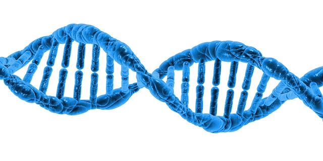 ADN, piel y envejecimiento