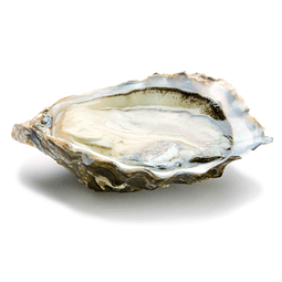 Special Oyster - Caliber n ° 3 - 1kg - (approx. 12)
