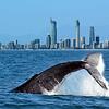 14 semanas inglés en Gold Coast $3.600.000 RESERVA POR
