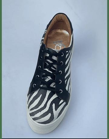 Miami Cebra