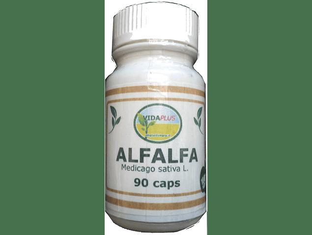 ALFALFA 3 FRASCOS DE 90 CAPSULAS DE 500 MG