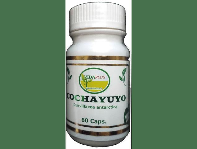 COCHAYUYO 5 FRASCOS DE 60 CAPSULAS DE 500 MG -  DESPACHO GRATIS