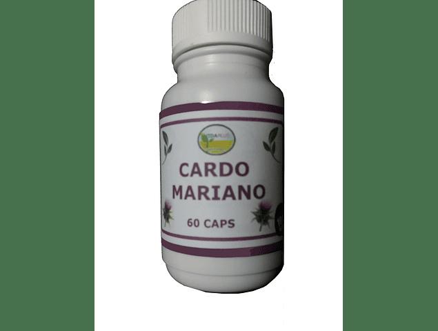 CARDO MARIANO 5 FRASCOS DE 60 CAPSULAS DE 480 mg.  DESPACHO GRATIS